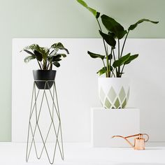 IVY MUSE HARLEQUIN PLANT STAND