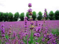 a website by aDONNAdesign | Fleurein bio | Research & Development natuurlijke producten
