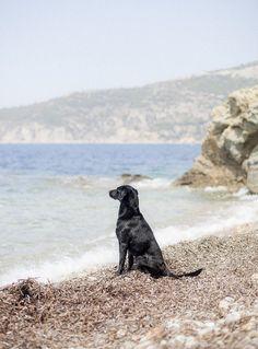 we enjoy the view Mans Best Friend, Art Inspo, Pet Dogs, Labrador, Pup, Beach, Real Talk, Travel, Image