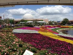 Flower show in Epcot. So beautiful!