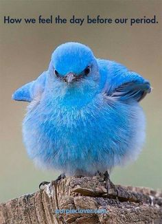 Saw a blue bird on a walk and realised how present I am. I would have missed it otherwise. Tropical Birds, Exotic Birds, Colorful Birds, All Birds, Little Birds, Pretty Birds, Beautiful Birds, Funny Animals, Cute Animals