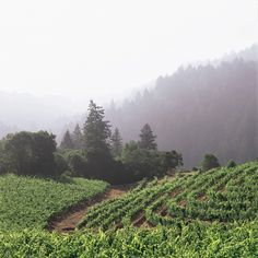 Image Detail for - Beringer Vineyards | Spotlight's Wine Country Guide