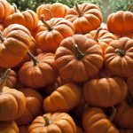 Easy Way to Bake and Store Your Pumpkin