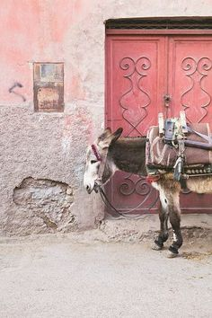 A donkey by a faded door in Marrakech, Morroccco