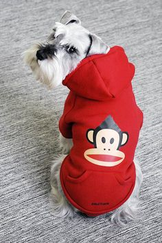 This pup is looking super awesome in this   #PaulFrank hoodie from 26 Bars & a Band! #dogs