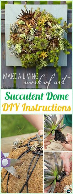 DIY Living Succulent Dome Wall Art Instructions - DIY Indoor Succulent Garden Ideas Projects