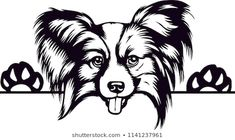 Find papillon dog stock images in HD and millions of other royalty-free stock photos, illustrations and vectors in the Shutterstock collection. Thousands of new, high-quality pictures added every day. Pappillon Dog, Street Painting, Cool Fathers Day Gifts, Dog Facts, Line Drawing, Animal Drawings, Dog Breeds, Stock Photos, Pets
