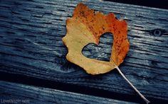 Autumn heart leaf outdoors heart autumn wood leaf