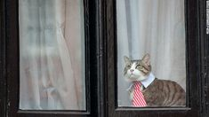 Cat with a tie