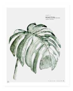 Limited Edition print Botanic Urban //  Plate 3. Signed and numbered. Watercolor #urbanbotanic