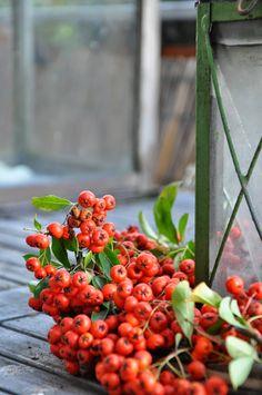 Il Giardino del Brocante: Pacchetti e decorazioni natalizie all'insegna del verde
