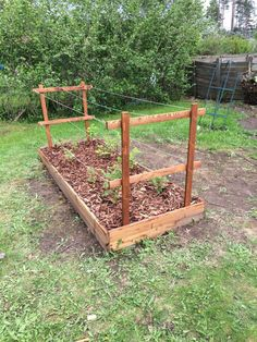 Love the proportions on this visually. I was thinking maybe a little bit taller raised bed, and fill to the brim with berries. Raspberries and maybe serviceberries or whatever climbing the trellis, and spreading strawberries and flowers and stuff under. A pop of color that I'll always be able to see
