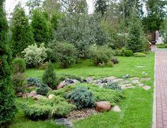 Хвойные растения для сада. Хвойные в ландшафтном дизайне