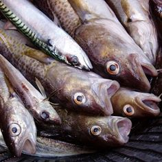 Mass Fish Deaths: Millions Have Been Found Dead All Over The World In The Past Month - link to global warming? All Over The World, The Past, Fish Activities, Fish Feed, Marine Environment, Jesus Is Coming, End Of Days, Morning News, Animals Of The World