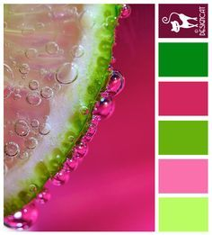 Wedding Pink Green Bright On Pinterest Color Schemes Combos