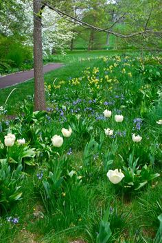 Chanticleer's Bulb Lawn: This is no ordinary field.