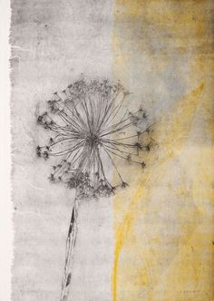 Elisabetta Diamanti sketch of dandelion in black; swash of colour on right dd Art And Illustration, Botanical Illustration, Abstract Landscape, Abstract Art, Landscape Paintings, Atelier Theme, Encaustic Art, Colorful Paintings, Botanical Art