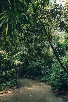 The Eden Project: Rainforest Biome — Haarkon | Lifestyle and Travel Blog.