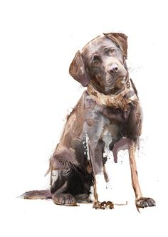 Chocolate Labrador - A painting of a Chocolate Labrador Dog by professional pet…