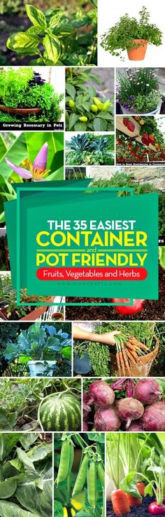 The 35 Easiest Container and Pot Friendly Fruits, Vegetables and Herbs - Unique gardening ideas by diyncrafts.com team! #ad