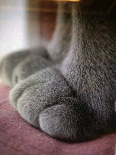 The 20 Cutest Pictures Of Cat's Paws http://www.buzzfeed.com/floperry/20-cutest-pictures-of-cats-paws-ic9t?s=mobile … pic.twitter.com/Qq0EqZ9fd7