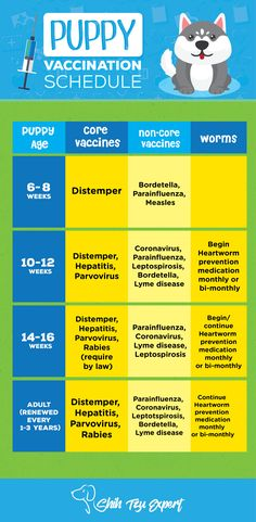 Why You Should Vaccinate Your DogsPuppy Vaccination Schedule : Puppy Shots for Health and Safety of our Fur Babies!!!