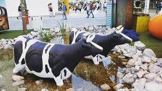 Mucche Expo #mucca #expo #expomilano #cascinatriulza #cascinatriluzaexpo2015 #igerlombardia #igermilano #instagram #milano #milanodavedere #latte by paolo_emiliano_federico