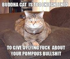 Buddha Cat.