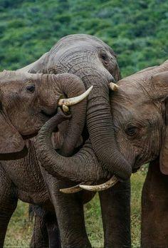 Elephant Love !!