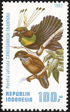 Western Parotia stamps - mainly images - gallery format