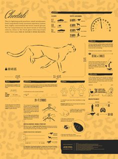 The Cheetah Animated Infographic