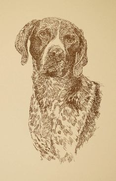 German Shorthaired Pointer: Dog Art Portrait by Kline - art drawn entirely from the words German Shorthaired Pointer. drawdogs.com : drawdogs.com http://drawdogs.com/product/dog-art/german-shorthaired-pointer-dog-portrait-by-stephen-kline/ His collectors number in the thousands from over 20 countries and every state in the US. Kline's dog art has generated tens of thousands of dollars for dog rescues worldwide.