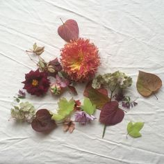 leftovers after making a autumn bouquet