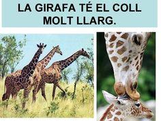 LLEGIR FRASES AMB ELS ANIMALS