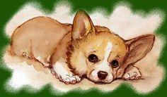 Weslsh Corgi Pembroke Utilização:Pastoreio Tamanho:30 cm Peso:10 a 12 quilos. Aspectos Gerais:é um cão de p...