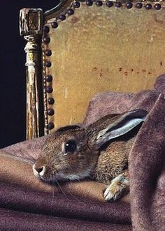 anim, weight loss, colors, peter rabbit, bunni, paintings, old chairs, easter bunny, eyes