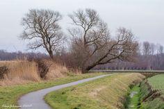 Natuurfoto Oost-Groningen: Mooie boom in de Gaast