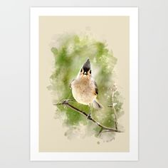 Buy Watercolor Tufted Titmouse Art Art Print by Christina Rollo. Worldwide shipping available at Society6.com. Just one of millions of high quality products available.