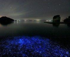 石川県七尾市の能登島で見られる海ほたる  夏になると海の砂の中から出てきて夜にはこのように光ります  能登島ではいくつか観察ポイントがあり手で触れることもできますよ  ほたるは夜の810時ごろが一番よく見えます 能登島の宿では夜に観察スポットまで案内してくれるところもあります 集まっては散らばる幻想的な光を見に来てください  tags[石川県]
