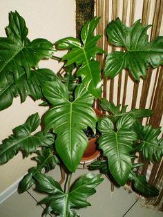 House Plants Decor, Plant Decor, Exotic Plants, Houseplants, Indoor Plants, Planting Flowers, Plant Leaves, Crochet Patterns, Planters