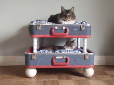 Cat luggage bunk beds