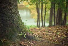 Att tillbringa tid i skogen innebär att vi mår bättre och minskar risken för allvarliga sjukdomar. Forskare har nu hittat anledningen till skogens helande effekt och vissa hävdar att det i dag är viktigare än någonsin att ge sig ut i naturen och lämna den stressiga vardagen.