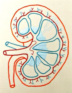 Embroidered Kidney