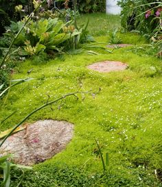 Scotch Moss Path - my plan instead of grass