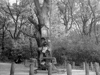 1950, Jánoshegyi út, 12. kerület Tarot, Trunks, Plants, Drift Wood, Planters, Plant, Planting, Tarot Decks, Tarot Cards