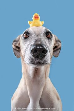 A dog and his duck by Elke Vogelsang - Photo 154393415 - 500px
