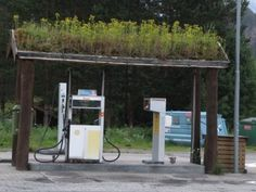 Gas station with living roof