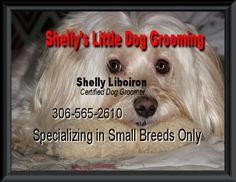 Professional Dog Grooming for little dogs Small Dog Breeds, Small Breed, Little Dogs, Dog Grooming, Own Home, My Family, Your Dog, Face Book, Puppies