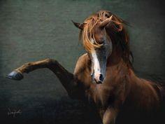 Photo by: Wojtek Kwiatkowski - Equine Photography Most Beautiful Animals, Beautiful Horses, Beautiful Creatures, Majestic Horse, Horse Drawings, All The Pretty Horses, Equine Photography, Horse Pictures, Horse Love