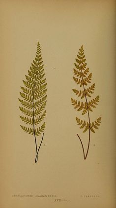 n89_w1150 by BioDivLibrary, via Flickr